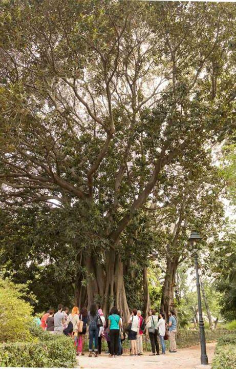 jardín ayora visita guiada biogeonauta rutas urbanas